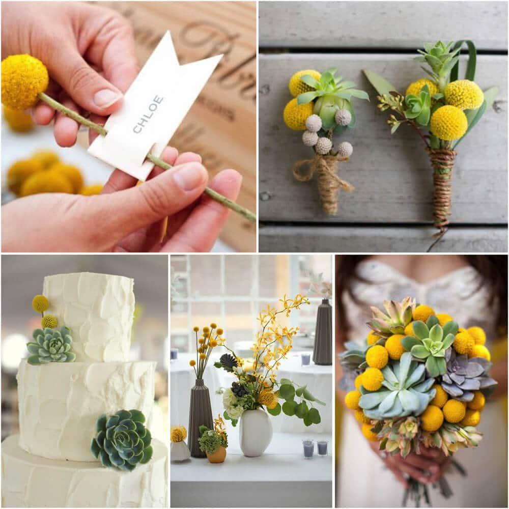 Matrimonio Tema Piante Grasse : Matrimonio in giallo: con mimose e piante grasse