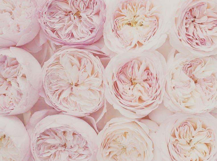 Fiori Matrimonio Rustico : Fiori matrimonio come scegliere quelli perfetti